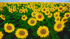 Sunflower Fields - Mosaic Art