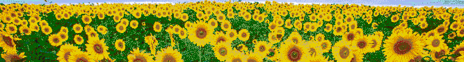 Sunflower Sky - Mosaic Art