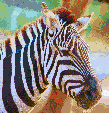 Zebra Head - Mosaic Art