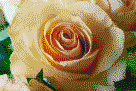 Apricot Rose - Mosaic Art