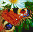 Peacock Butterfly Wing - Mosaic Art