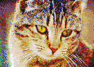 Bernice the Cat - Mosaic Art