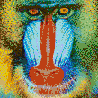 Mandrill Baboon Face - Mosaic Art