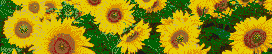 Sunflowers - Mosaic Art