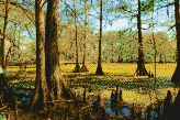 Louisiana Swamp - Mosaic Art