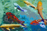 Rainbow Koi - Mosaic Art