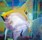 Gold Angelfish - Mosaic Art