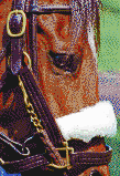 Race Horse Face (Lexington, Kentucky) - Mosaic Art
