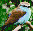 Blue Breasted Bird - Mosaic Art