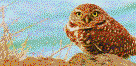 Burrowing Owl - Mosaic Art