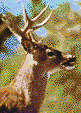 Whitetail Stag - Mosaic Art