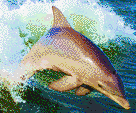 Dolphin Jumping in Wake - Mosaic Art