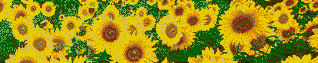 Sunflower Splashback - Mosaic Art
