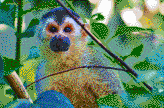 Central American Squirrel Monkey - Mosaic Art