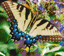 Swallowtail Butterfly - Mosaic Art