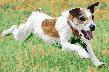 Terrier Racing - Mosaic Art