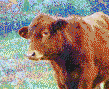 Simmental Calf (Cow) - Mosaic Art